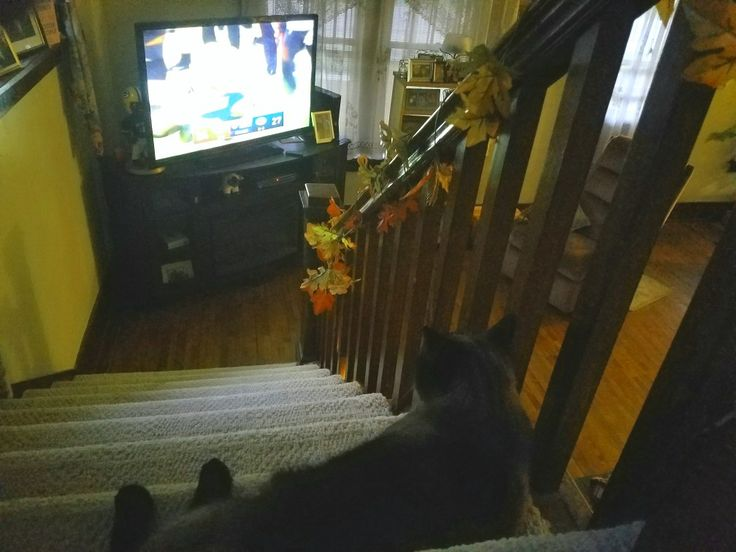 Lula the Packer fan, watching the overtime field goal win over the Bengals! 9/24/17