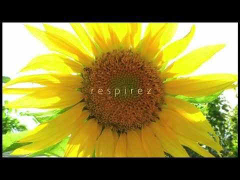 Méditation Ho'oponopono (écoute gratuite) | ÊTRE SPIRITUEL