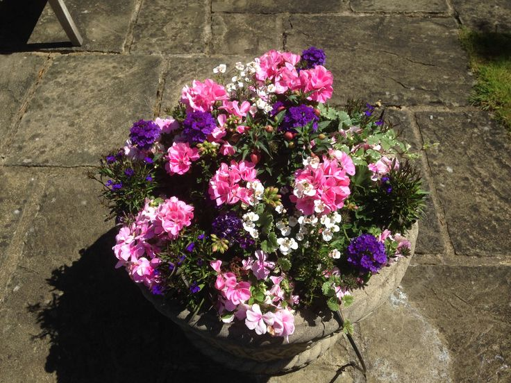 Summer pots packed full of colour