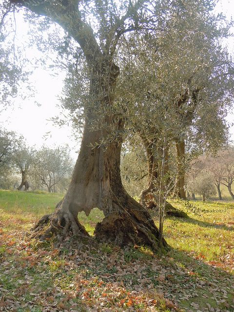 Baum mit Herz <3