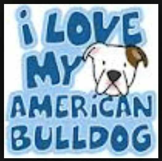 I love my American Bulldog
