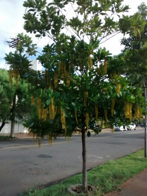 Lafontera - Pq Taquaral