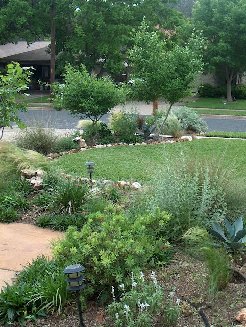 For alley side yard with existing crepe myrtles feather for Large grasses for landscaping