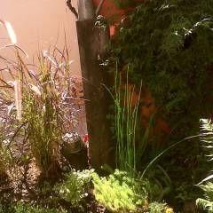 La Casa de Titi - Caballito: Jardines de estilo Moderno por APPaisajismo