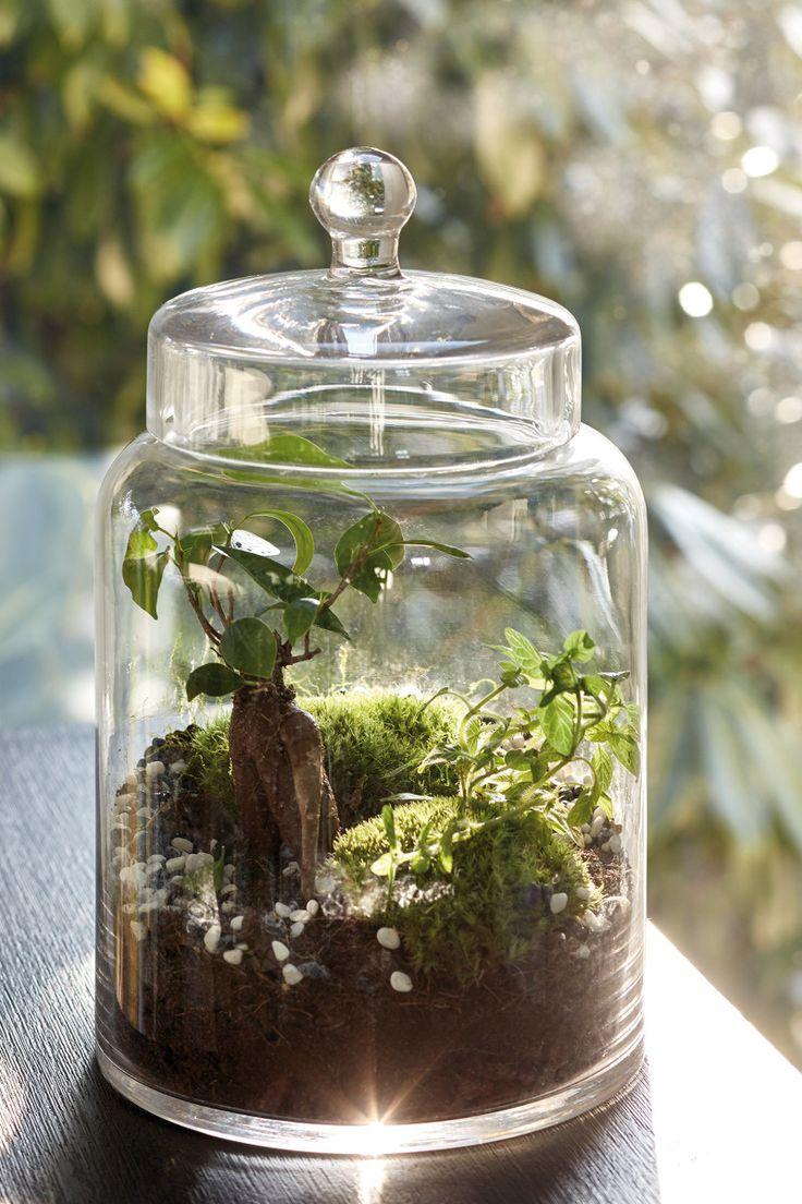 Terrarium - Ce jardin de verre est un véritable petit monde végétal qui décore votre intérieur. Placé sur votre bureau, dans votre salon, il laisse à la nature sa libre expression. Main verte ou non, vous n'interviendrez que rarement pour son entretien ! Son secret ? Un cycle de l'eau autonome et complet : la condensation naturelle de la plante assure toute l'humidité dont la terre a besoin pour nourrir à son tour ses racines ainsi que celles de la plante.  A partir de 35€