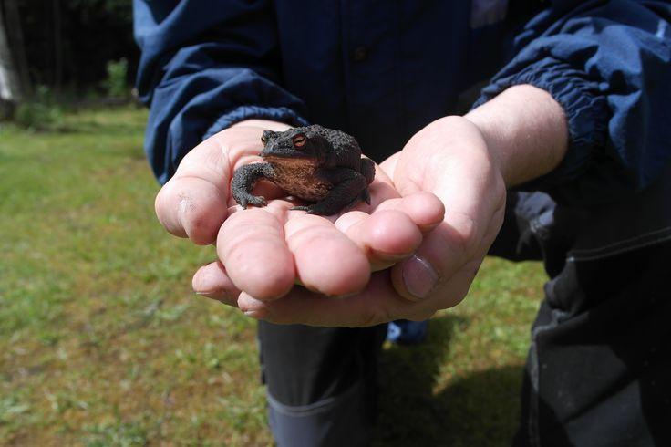Det finns gott om grodor ... jag menar paddor. Vi trivs bra ihop.