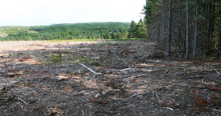 Que atividades humanas colocam em perigo ou danificam áreas florestais?. Acredita-se que a atividade humana possa ser a causa principal da destruição das florestas ao redor do mundo. Os recursos naturais das florestas têm sido usados para comércio, e em uma dimensão menos pessoal, usa-se com pouca consciência do dano que causa ao ecossistema das florestas. Como resultado, um dano permanente está sendo causado nessas ...