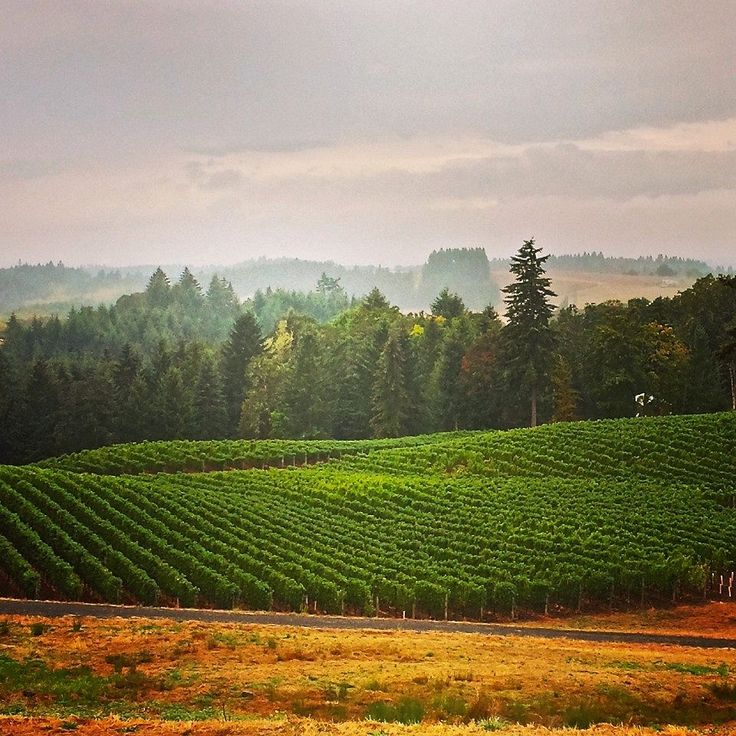 Willamette Valley is home of the Pinot Noir. Here are some places to go and  things to look for when wine tasting in Willamette Valley, Oregon.