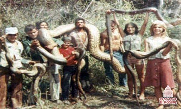 Anaconda flagrada no meio da Floresta Amazônica