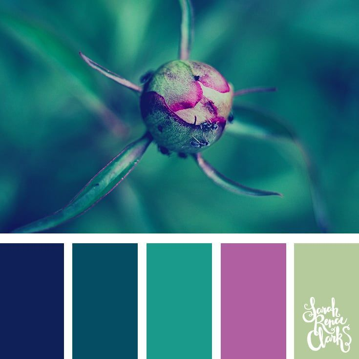 25 Best Ideas About Teal Color Schemes On Pinterest: Best 25+ Teal Color Schemes Ideas On Pinterest