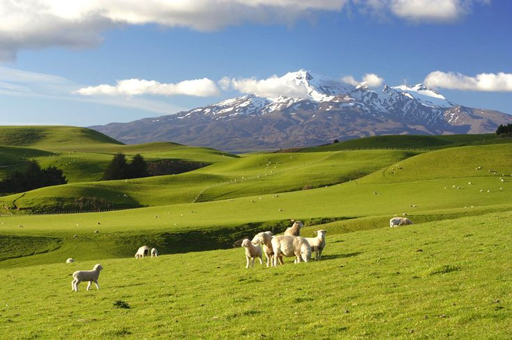 New Zealand is famous for majestic mountains and lots of sheep