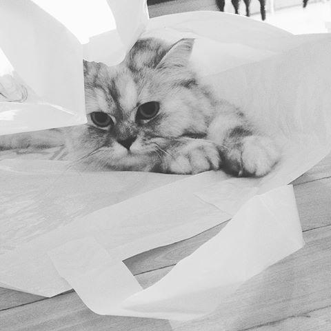 je lui achète un petit lit pour qu'elle aille dormir dedans mais elle préfère un sac plastique hahaha pas grave elle est cute