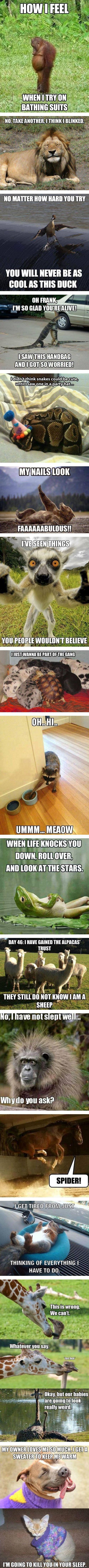 The best animal memes