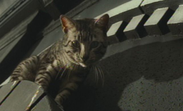 Midnight is a Mau cat who changes the life of a meek woman in the comic book inspired film Catwoman (2004).