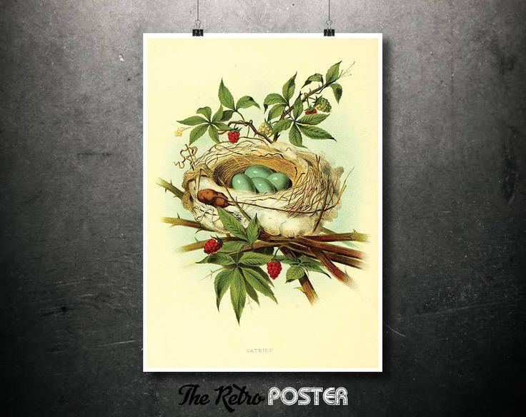 Kitchen Decor - Catbird Nest - Nature Prints, Bird Art, Bird Print, Botanical Poster Vintage, Kitchen Gifts, Nature Art Prints by TheRetroPoster on Etsy