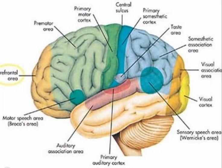 Nutrientes necesarios para aumentar tu inteligencia   Sentirse bien es facilisimo.com