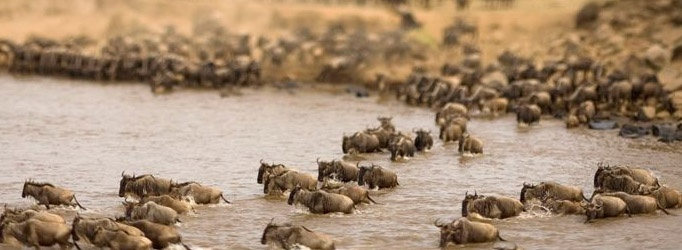 Kenyan Odyssey African Safari