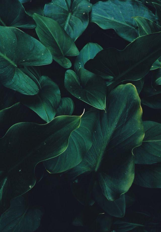 Iphone Wallpaper Green Aesthetic Dark Green Aesthetic Nature