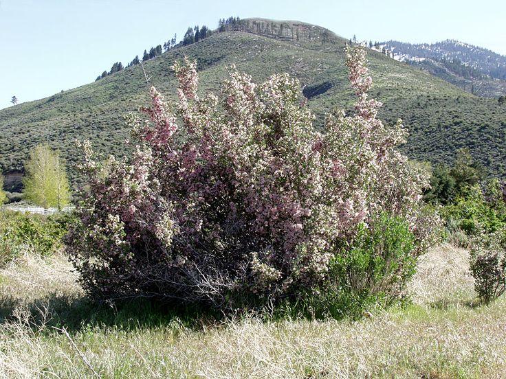 Porterella carnosula Donner lake, State parks, Mother nature