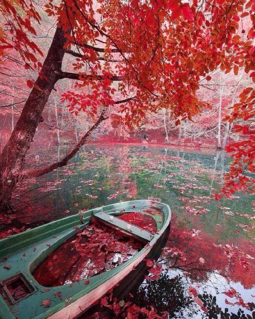 Pretty fall day  Yedigöller Bolu Turkey. Photo by @bihterelis...