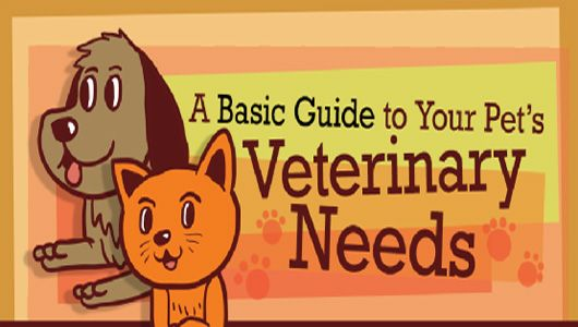 You can provide rudimentary veterinary care for your pet by maintaining vaccinations, exercise and diet.