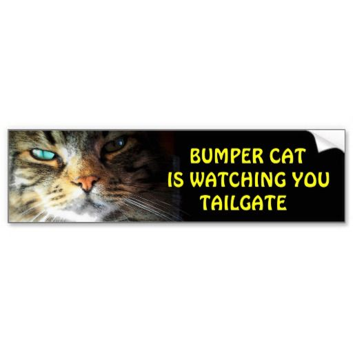 """Bumper Cat is watching TAILGATE 2 Angel has just the right look for """"Bumper Cat"""" it seems because this one, in a series of bumper cat is watching you, is outselling all the others combined. My second most sold bumper sticker."""