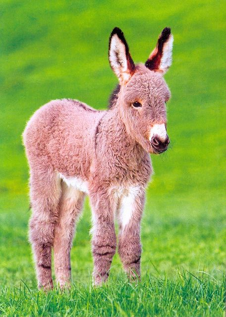 The cutest donkey!!!