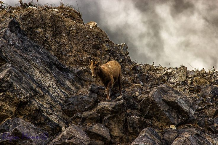 Lone Sheep by Elgin Mann on 500px