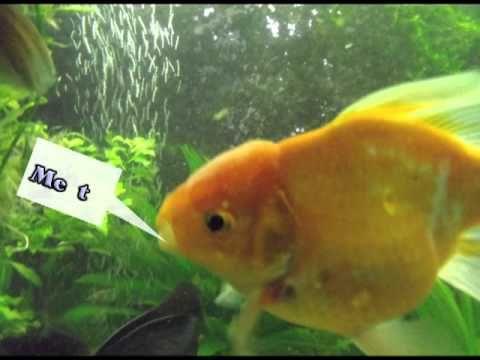 ...do Fishes really  talk . . . ?