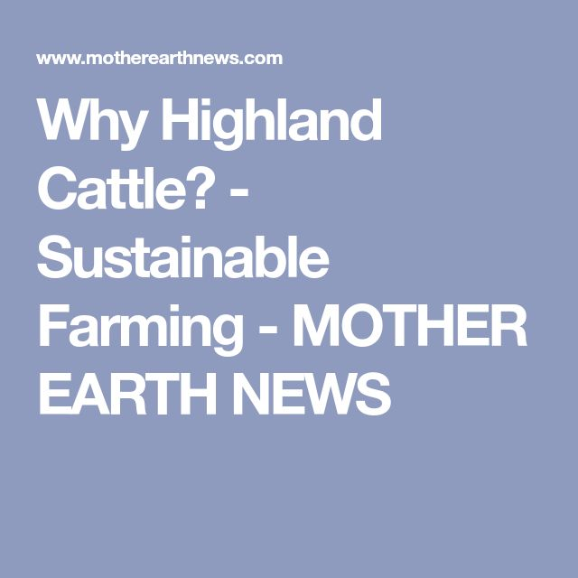 Why Highland Cattle? - Sustainable Farming - MOTHER EARTH NEWS