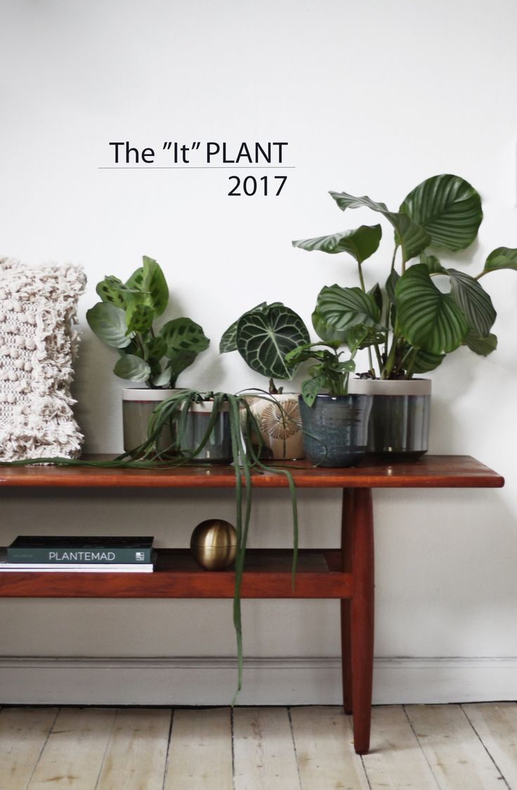 The it Plant