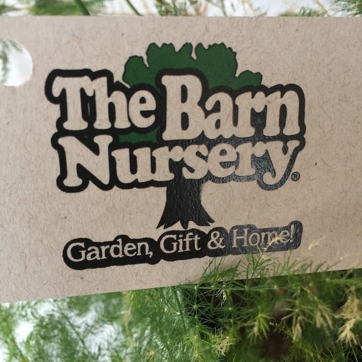218 Best Images About Ferns From The Barn Nursery