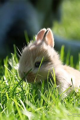 It just makes me think of spring when I see this sweet baby bunny!  cute baby animals from thedesigninspiration.com