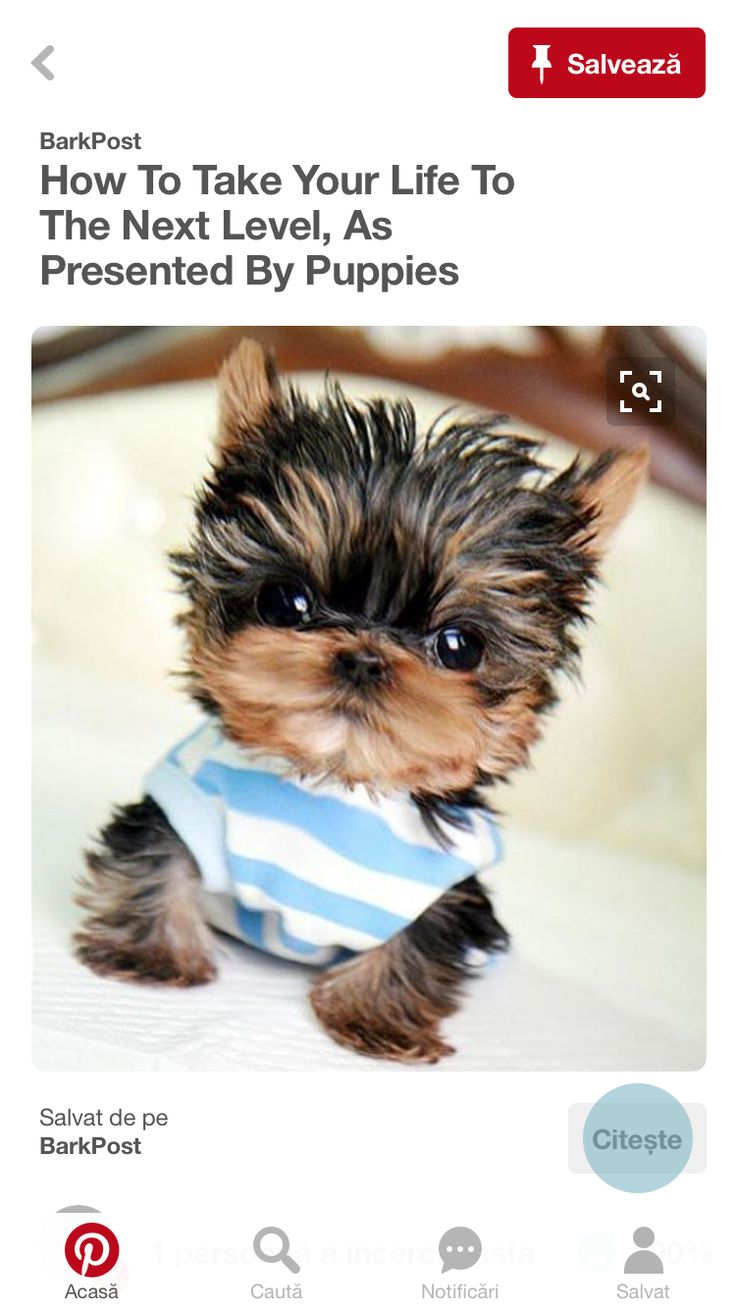 best too cute images on pinterest doggies cute dogs and
