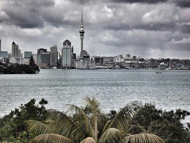 Looking at down town Auckland from North shore Auckland