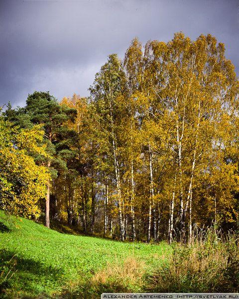 Birches. Russia, Tverskaya obl.    f5.6 1/(250-60) | f5.6 1/125    Linhof Technika iii, Rodenstok 150mm, Velvia 100