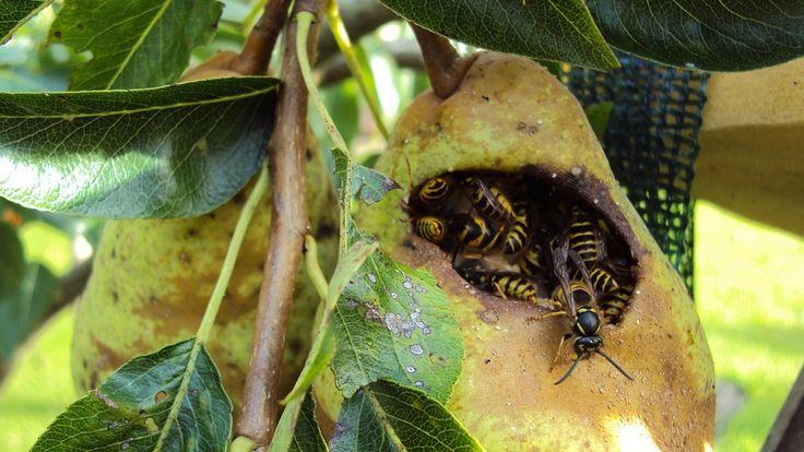 Des arbres fruitiers en pleine forme en été : quels sont les soins à leur apporter