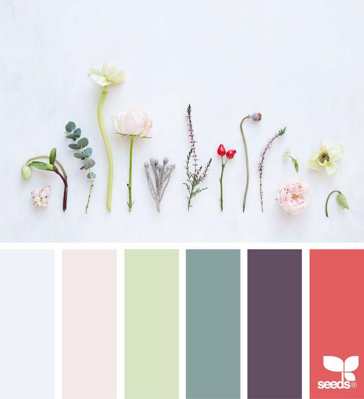 Color Cuttings via @designseeds  #seedscolor #color #colorpalette #color #palette #pallet #colour #colourpalette #spring #flora #floral #flowers #citron #eucalytus #purple #berry #red