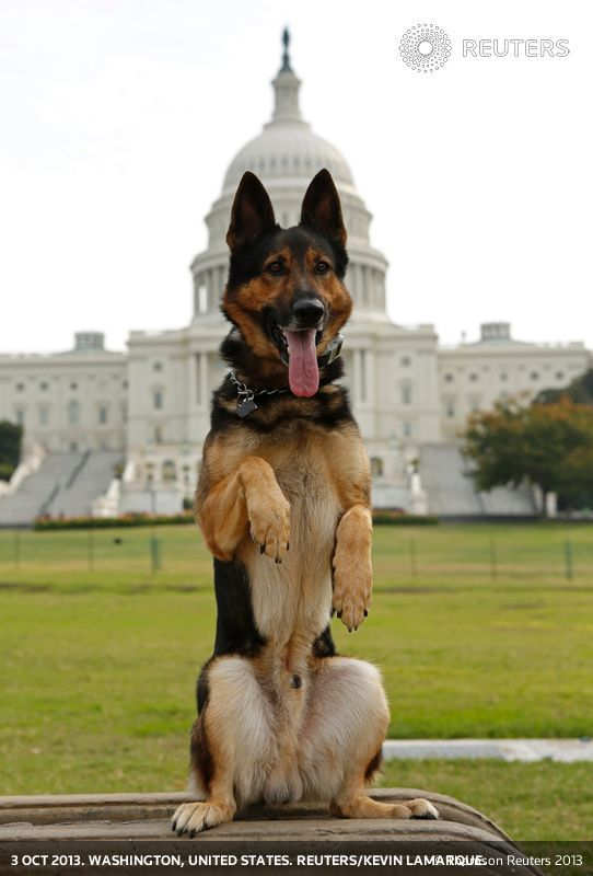 Floridapolice Dogs For Adoption