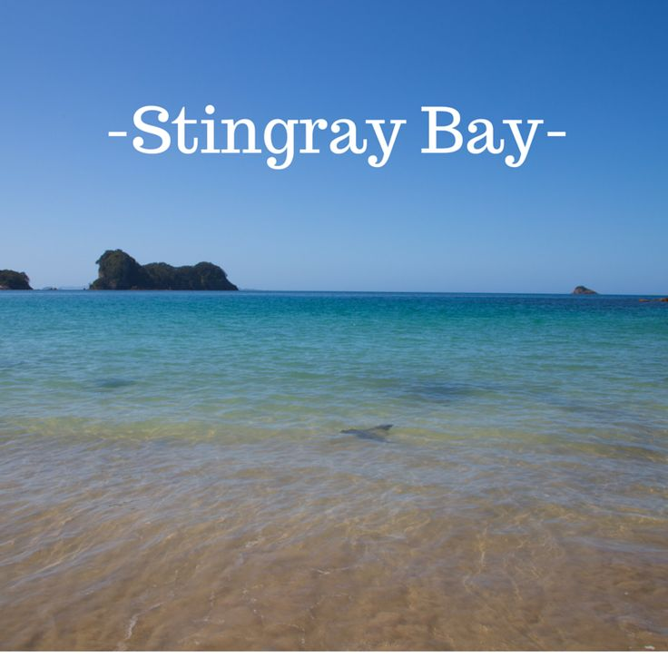 Stingray Bay, Coromandel, New Zealand.  This is on the way to Cathedral Cove, we were wondering why noone else was swimming in this beautiful bay with us. Then we realised it was full of stingrays!