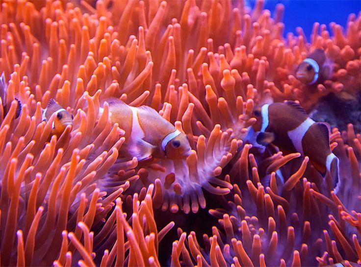 Koral Farbe 9 best no 25 spiel der korallen images on wall design