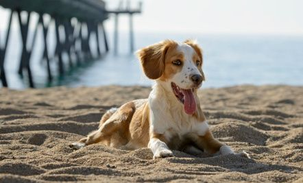 4 Summer Dog Dangers to Avoid:  bugs, sun, sand, and water.