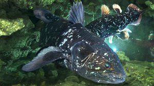 Wissen, Evolution, Evolution, Tier, Biologie, Meeresbiologie, Umwelt