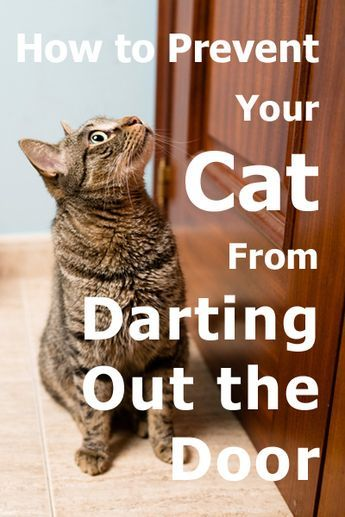 How To Prevent Your Cat From Darting Out The Door Cats