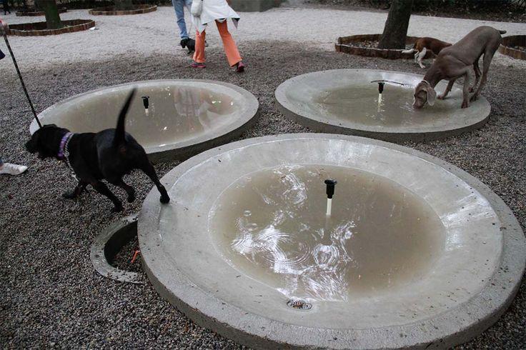 Abren área para perros en Parque México                                                                                                                                                     Más