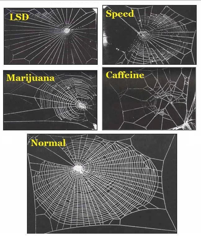 In 1995 a group of NASA scientists studied the effects of various legal & illegal drugs on house spiders, specifically on the way they weave their webs.    The spider high on marijuana did an ok job weaving, but then got bored/distracted & didn't finish. The one on speed went really fast, but without much awareness of the overall picture, leaving gaps. The acid-trippy spider wove a psychedelic, symmetrical web which was very pretty but not great at catching bugs while coffee speaks for…