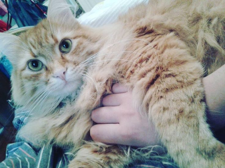 Tornare e trovarlo così ti sono mancata eeeehhh??? ;) ;) #broncio #amoremio #draghetto #timangiodibacini #occhioni #cat #kitty #animals #persian #siberian #tiger by acidia_doll http://www.australiaunwrapped.com/