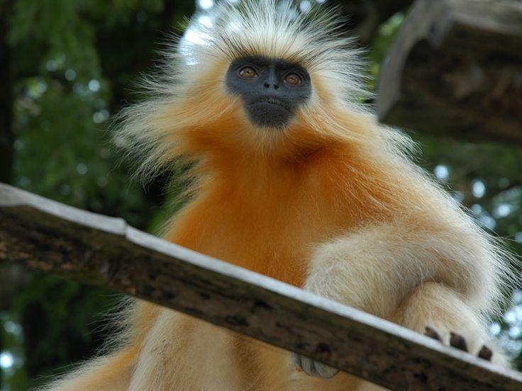 Trishna Wildlife Sanctuary - in Tripura, India