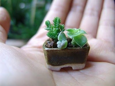 mini terrarium