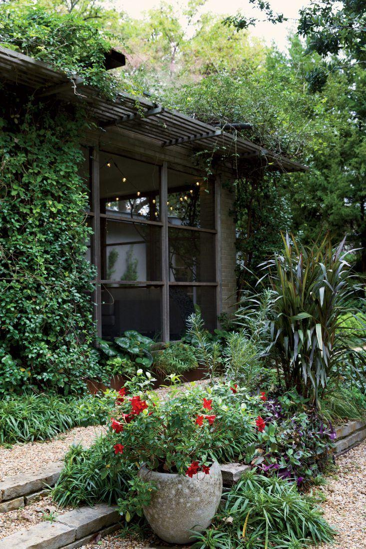Star jasmine and evergreen wisteria climb the trellis.